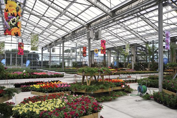 Esposizione vendita piante e fiori pietrasanta giardini for Piante e giardini