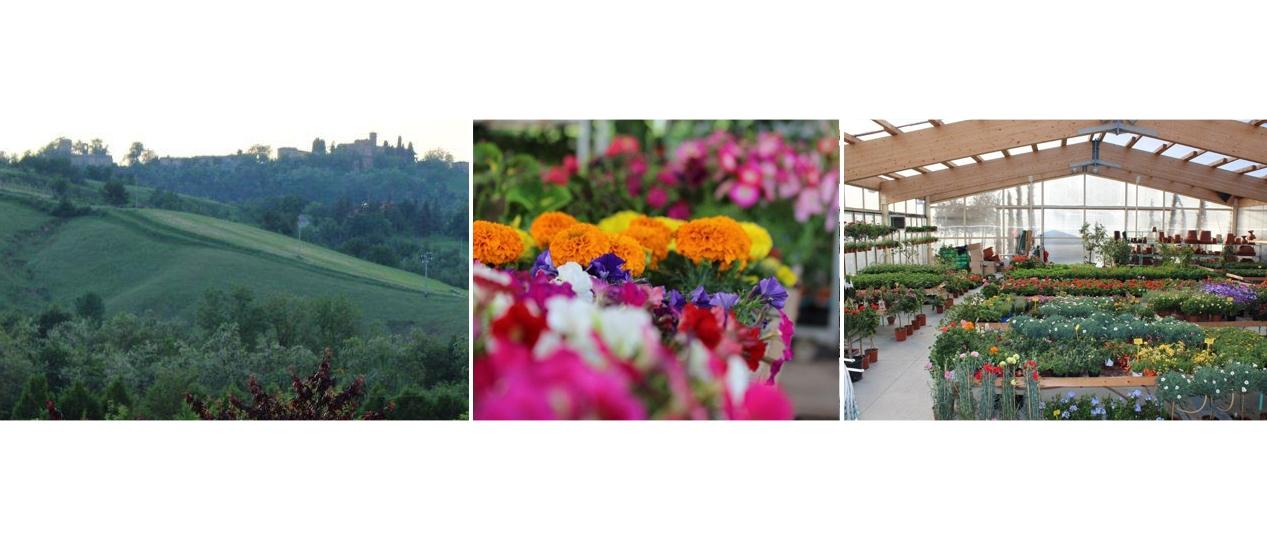 Vivaio serra manfredini vivai piante e fiori for Giardiniere bologna